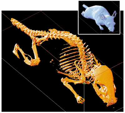 Do Mice Have Bones