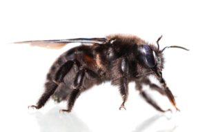 Black Bees