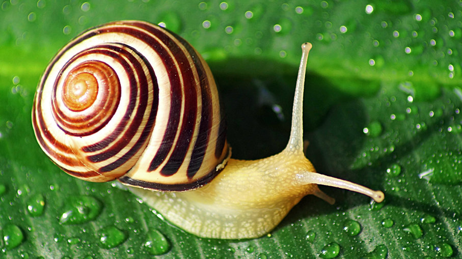 What do snails eat?